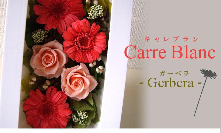 キャレブラン・ガーベラ(ピンク)【プリザーブドフラワー】